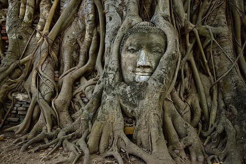 7-buddhahead-ayutthaya